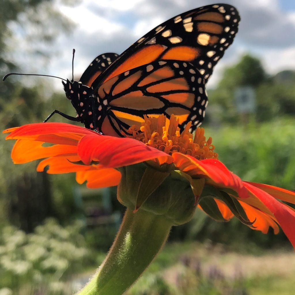 farm tours pollinator